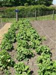 Flockton First School Allotment